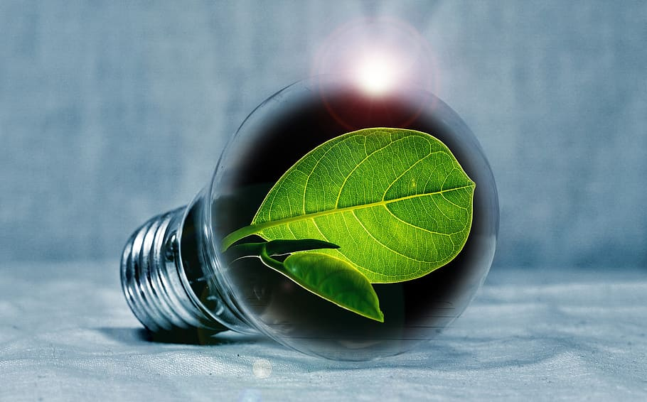 Business Management Technology Benefits Ecology
