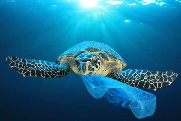 best natural drinking straws ocean pollution