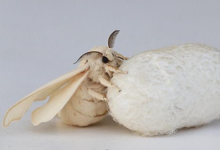 health benefits of organic silk fabric
