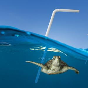 best natural drinking straws