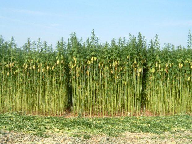 health benefits of hemp fabric