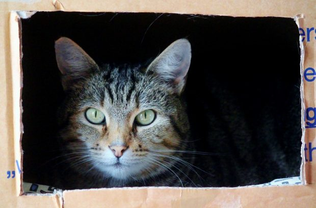 tips for moving with pets read sheeba magazine