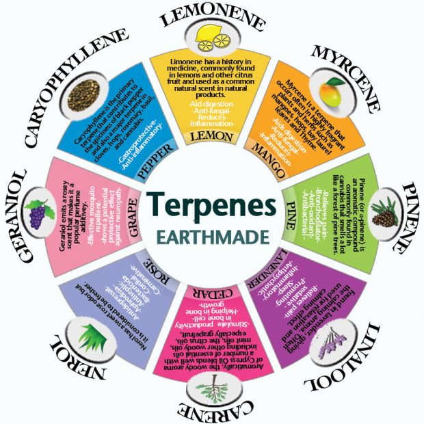 cannabis terpenes in food