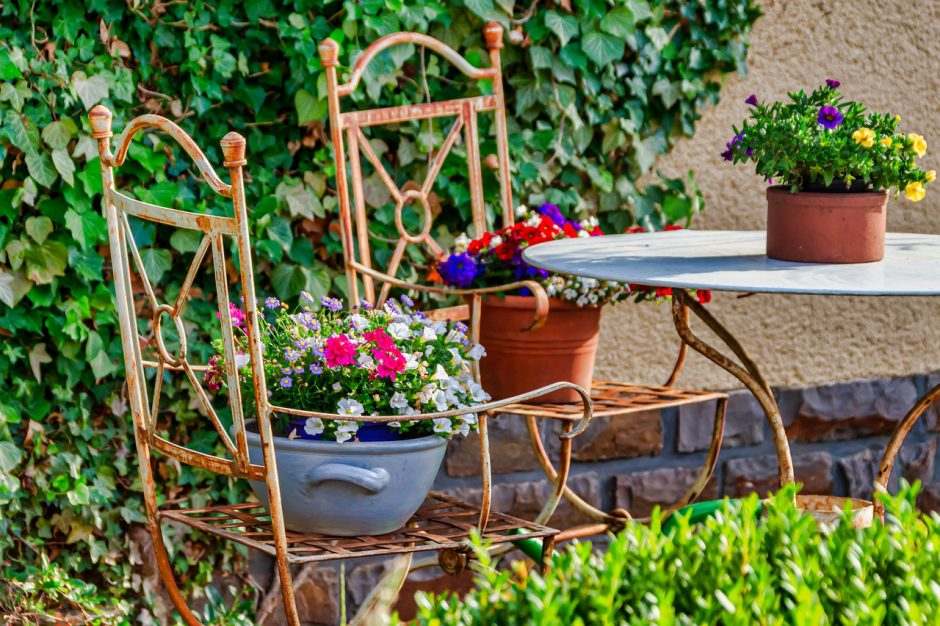 Reveal the Magic in Your backyard flowers sheeba magazine