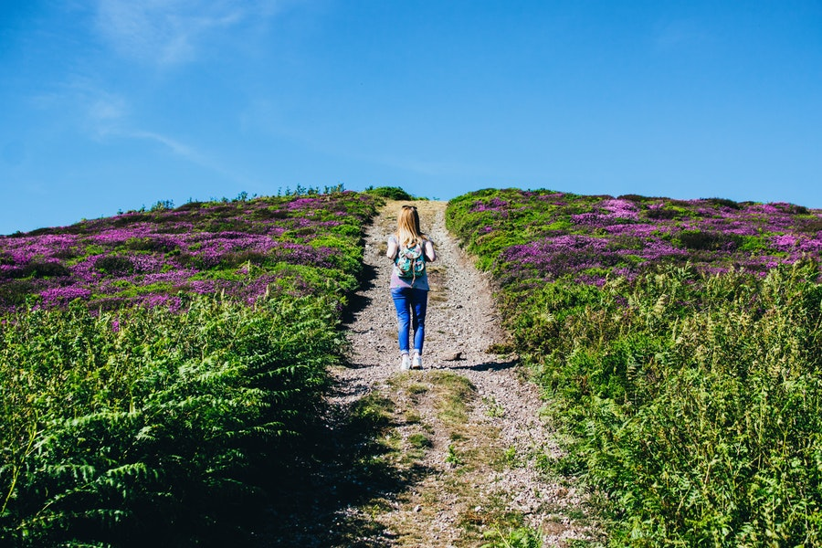 plants and herbs for stress and anxiety