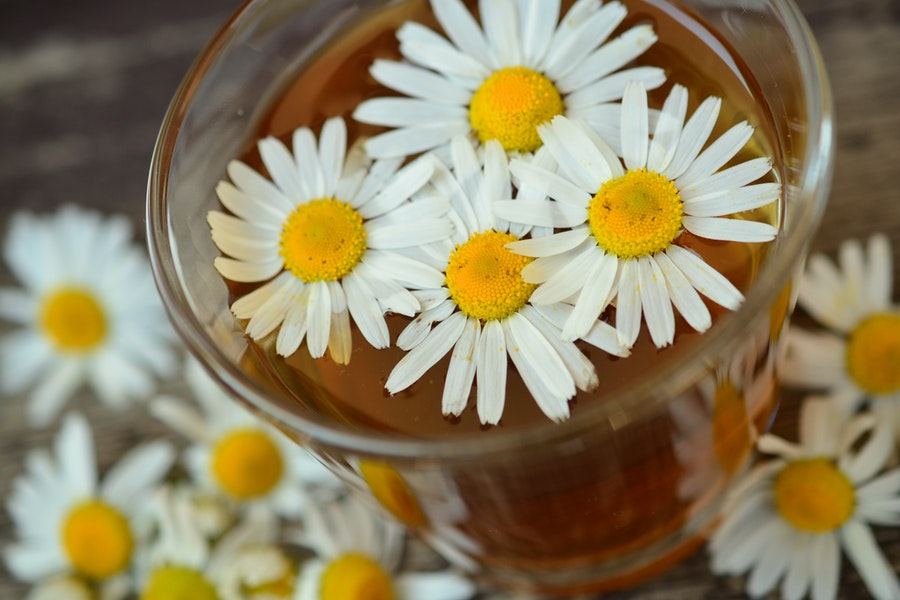 plants and herns stress and anxiety Chamomile
