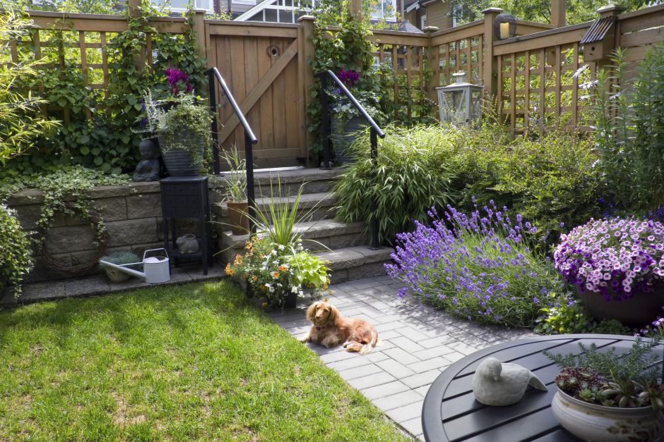 Pet-Friendly Landscaping