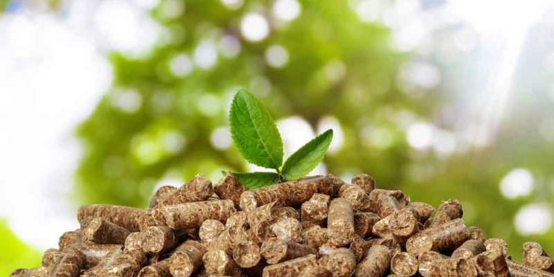 sustainable energy for business biomass based energy