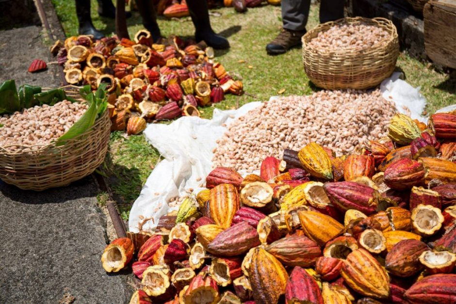Chocolate Festivals over the Caribbean