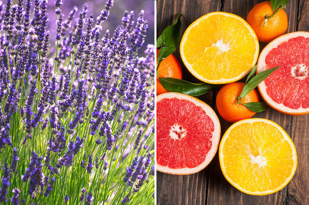 What Types of Scents Suit Your Personality citrusy levander