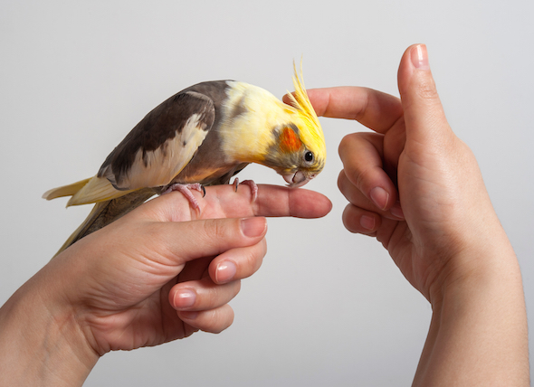careful oberservation of bird behavior