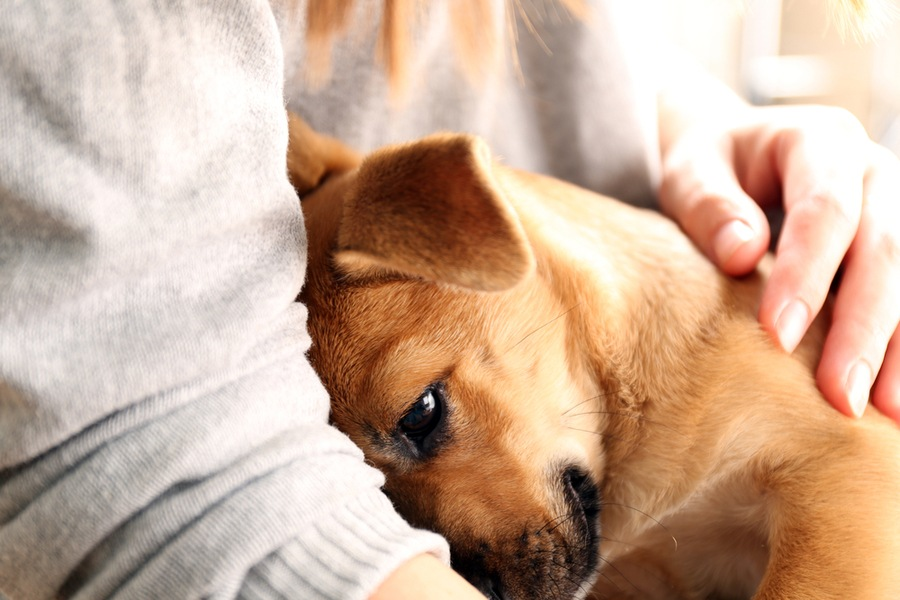 How to Manage Your Pet's Stress