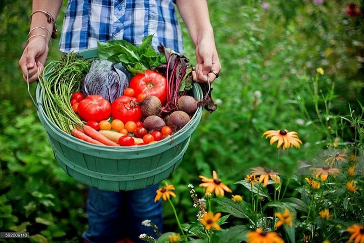 organic food on a budget grow your own food