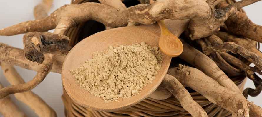 Benefits of Tongkat Ali Eurycoma longifolia