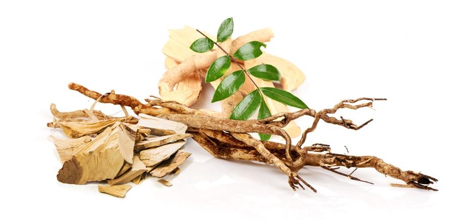 Benefits of Eurycoma longifolia supplement