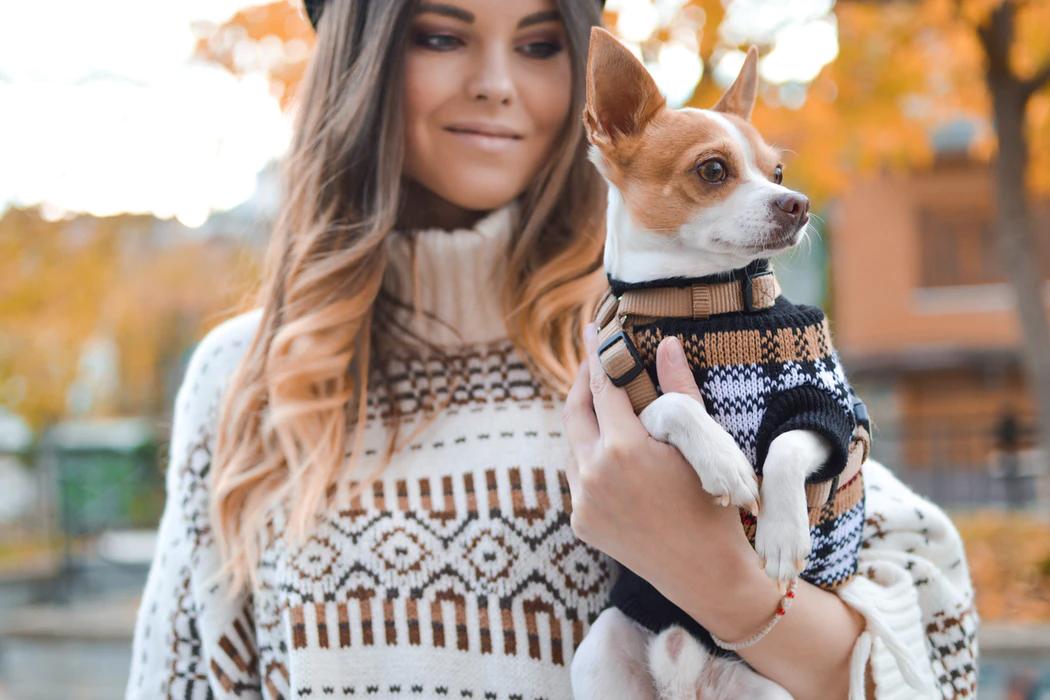 designer coats for your dog