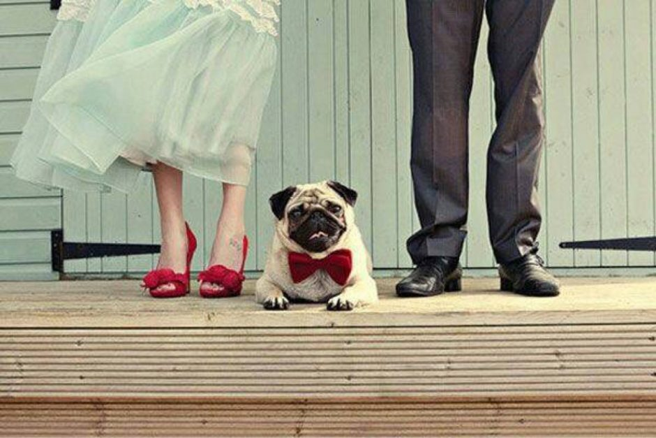 your pet at your wedding