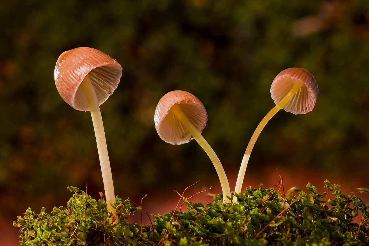 How To Cook With Magic Mushrooms And CBD Oil