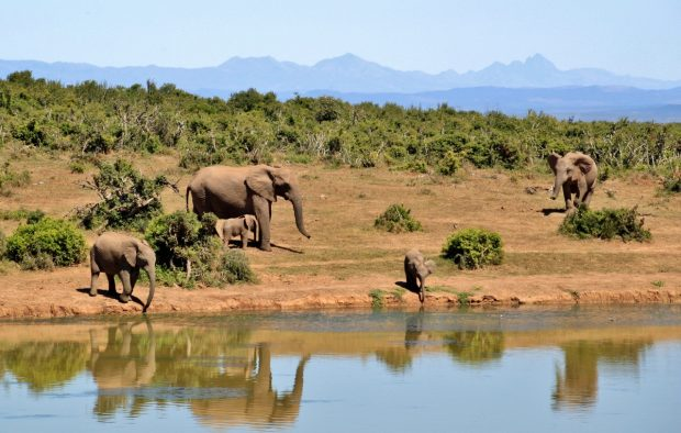 10 Unforgettable Ethical Wildlife Vacations for Animal Lovers