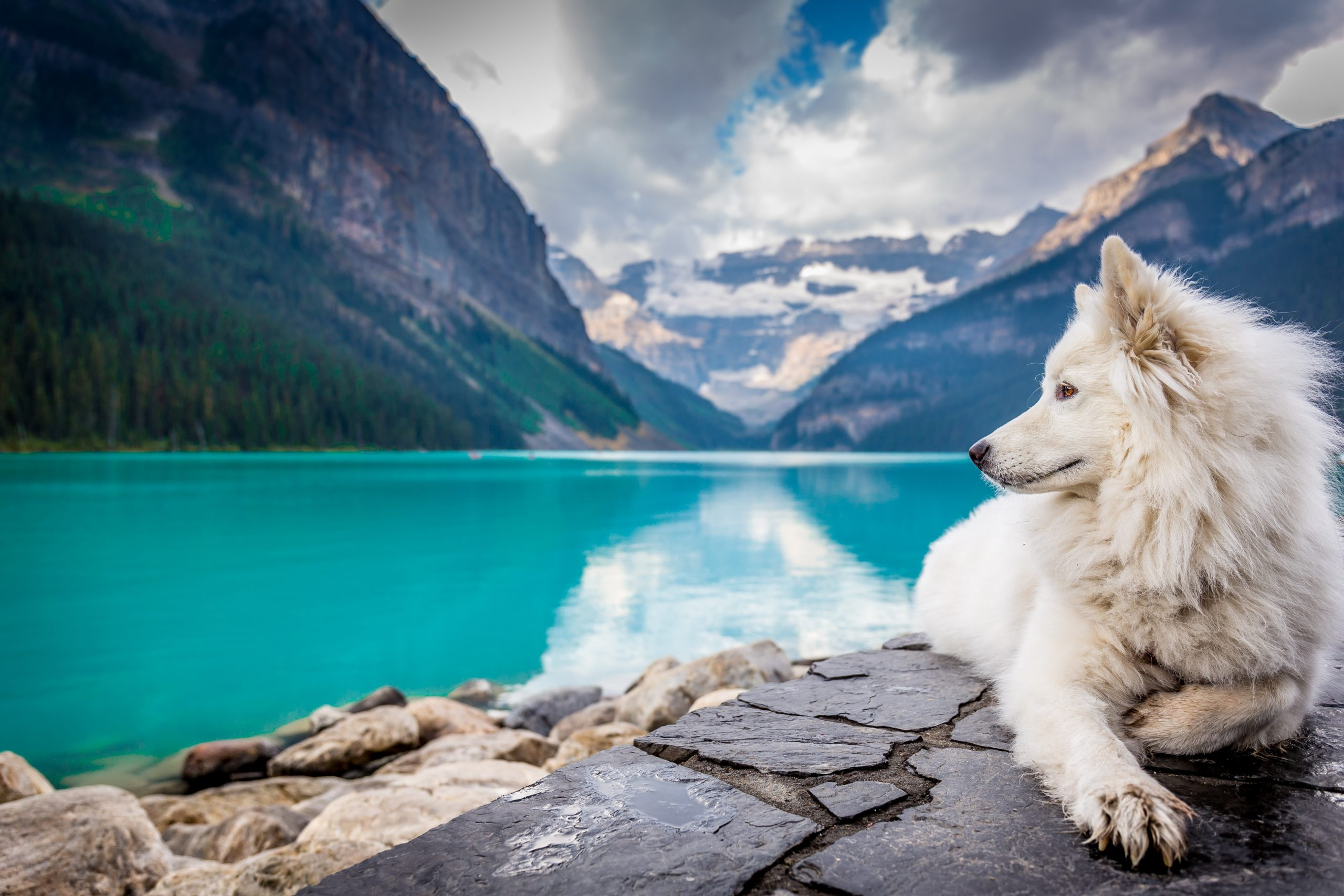 Epic Road Trip Ideas to Take With Your Dog