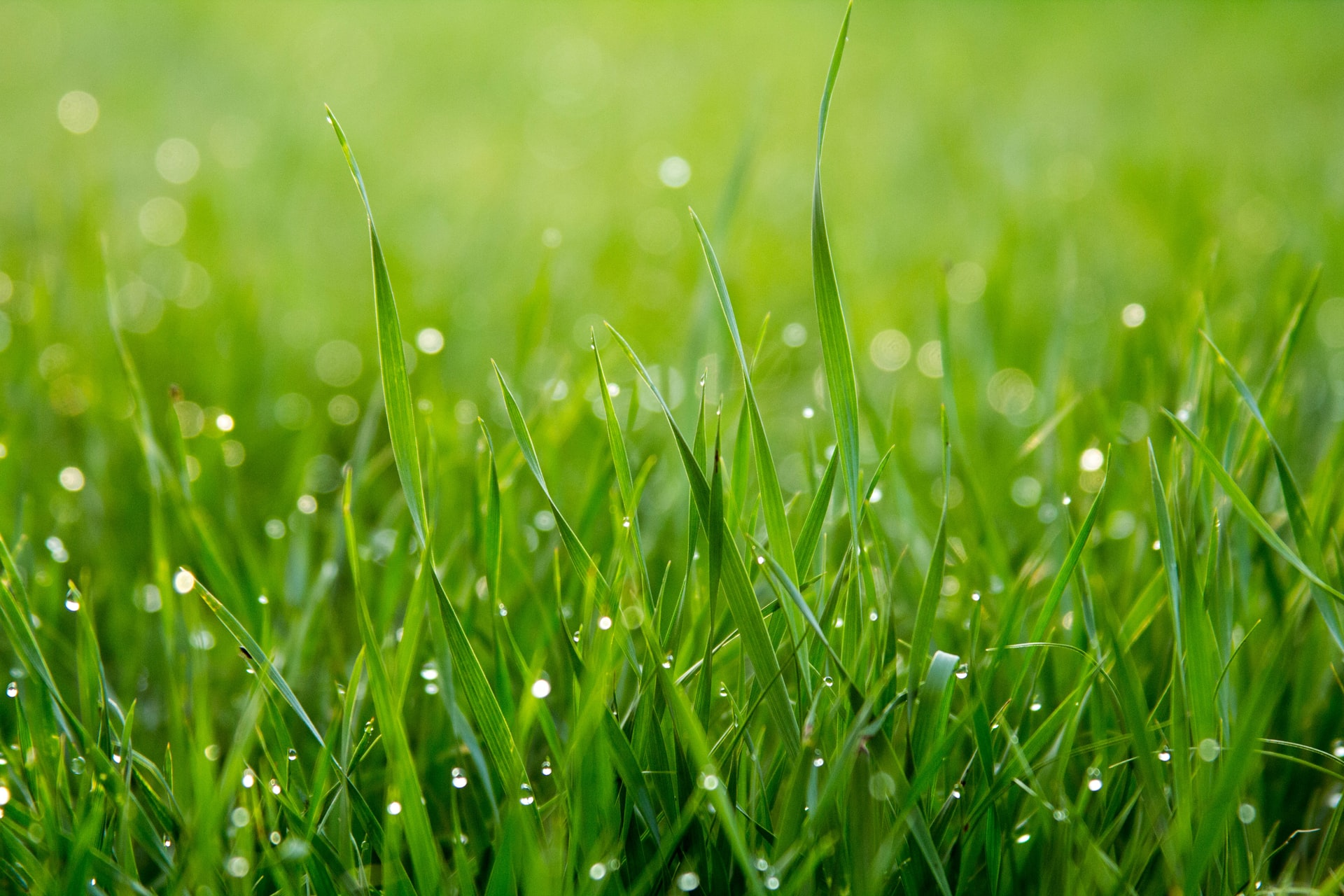 watered lawn