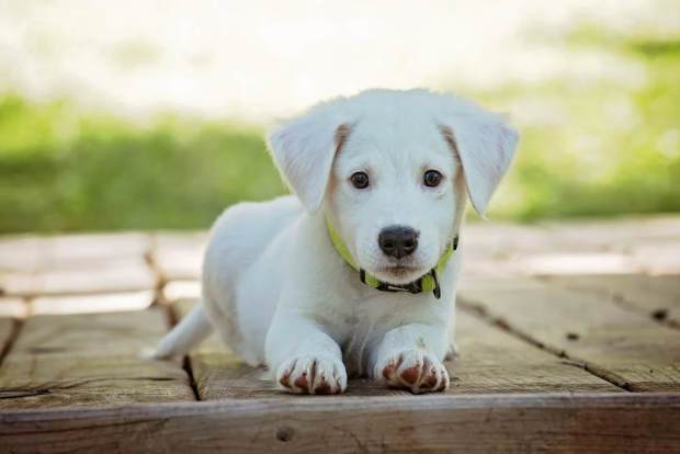 How to Prep Your Puppy for a Road Trip