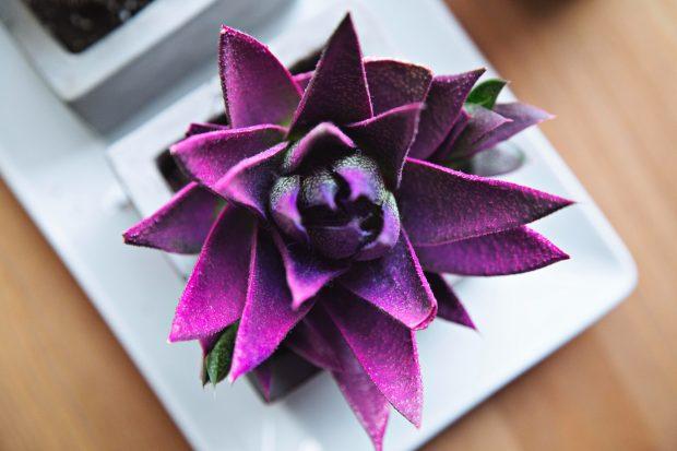 Amazing Decorative Items