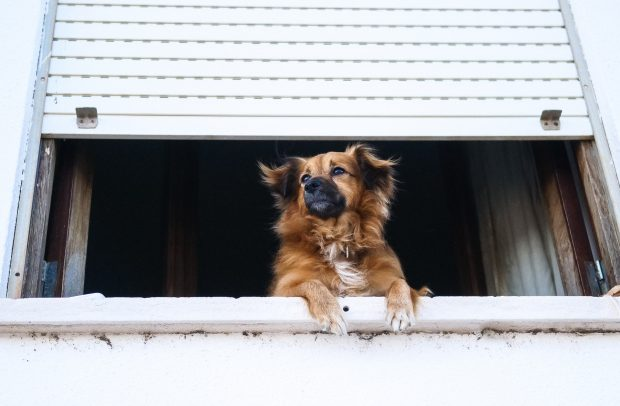 5 Things to Be Aware of as Your Dog Get Older