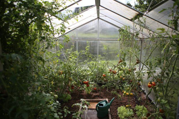 How Gardening Benefits Your Health