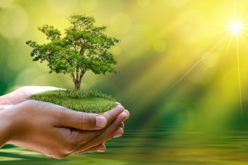 When Is the Best Time to Plant a Tree