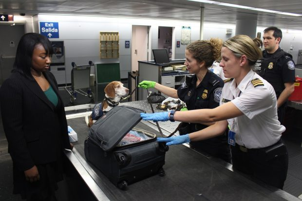 your pet in airport
