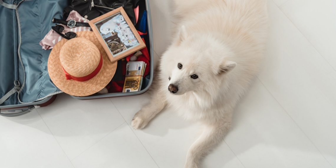 How to Travel Internationally With a Dog