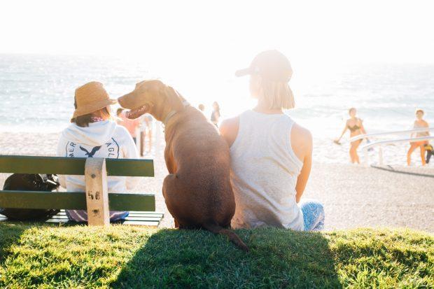 dog and longevity