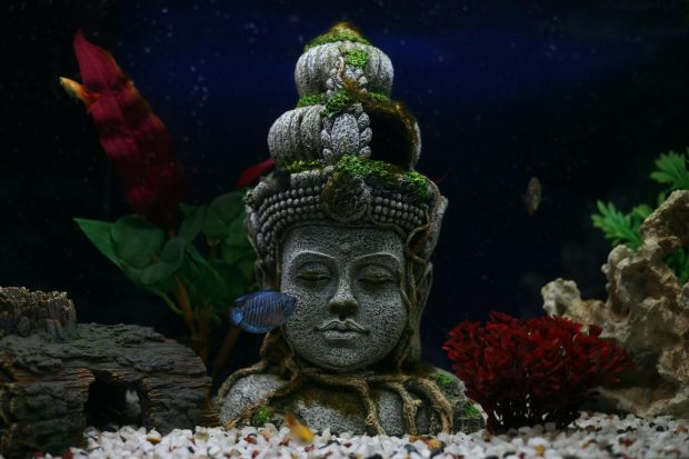 A Home Aquarium for a Unique Feature and Style