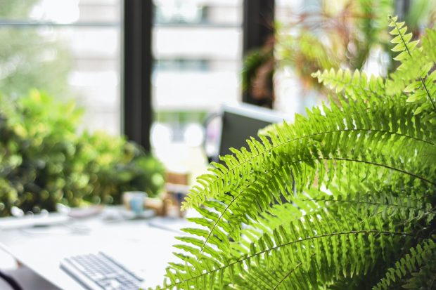 How To Create A Productive Workplace Inspired By Nature