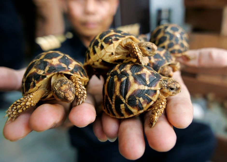 Things To Consider Before Buying Your Pet Tortoise
