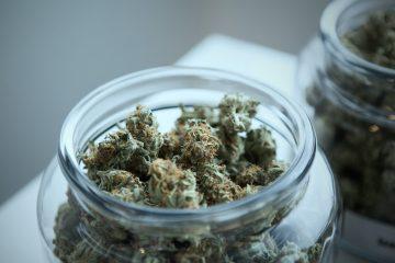 consume cannabis