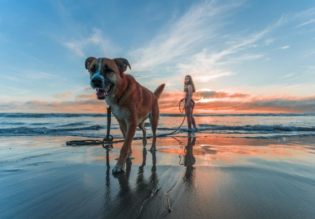 International Travel with Your Dog