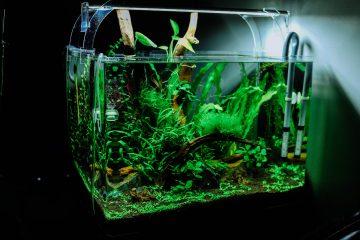 health benefits aquarium fish tank